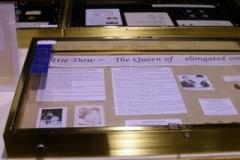 Dottie Dow - Exhibit - 1st place ribbon